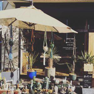 2/4(日)本日、アルタナテーブルマーケット開催中!ハナレの前では恒例のグリーン即売会オープン! この機会にぜひ!