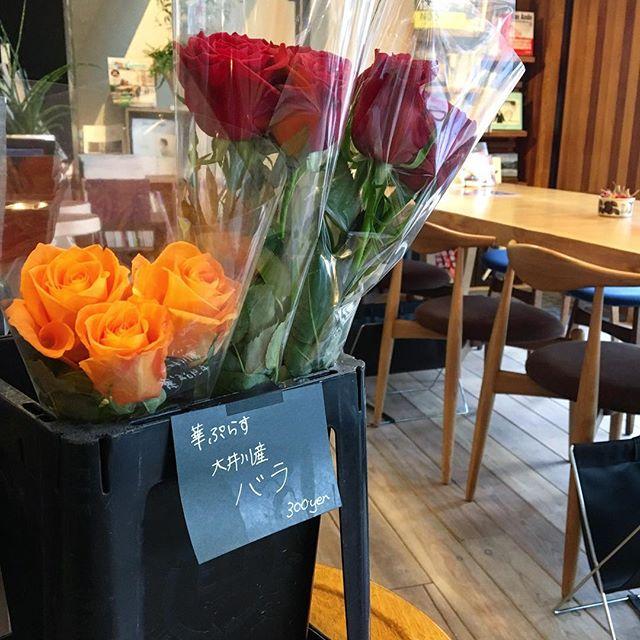 大井川の薔薇農家さん直送の薔薇販売しております! アルタナカフェは本日も10時よりオープン!アーブル美術館さんの「干支と旅と想いで」も開催中です(^^)