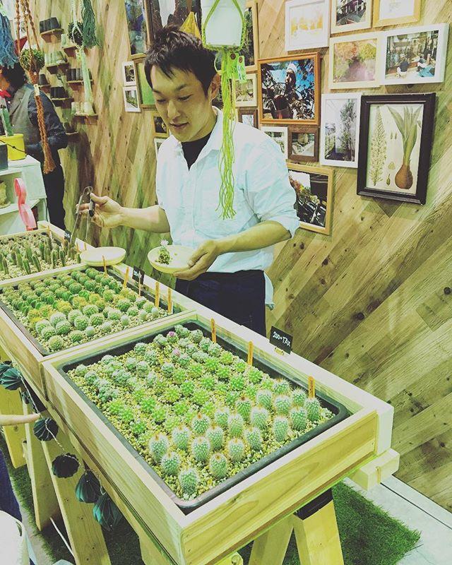 ふじさんめっせまるごと大感謝祭のヤマ造園さんのブースにて「サボテン狩り」開催中! 専門のスタッフがあなたの好きなサボテンを選んでくれますよ(^^)