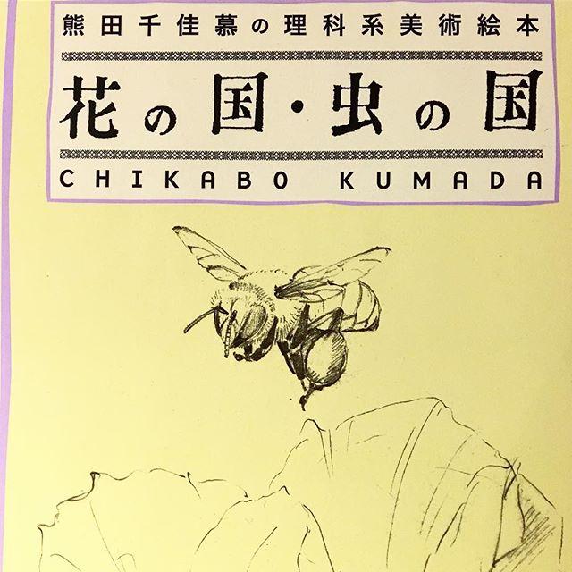 熊田千佳慕さんの美術絵本 繊細なタッチで描かれた花や虫が印象深い作品! 他にも野の花・花の風の美術絵本もあります! アルタナカフェは本日も10時よりオープンします(^^)