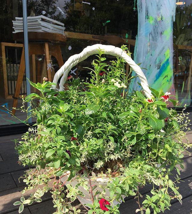 プランツギャザリング新しくしていただきました(^^) 色々な花が相まってとても綺麗ですね! アルタナカフェは本日も10時から17時までのオープンです。