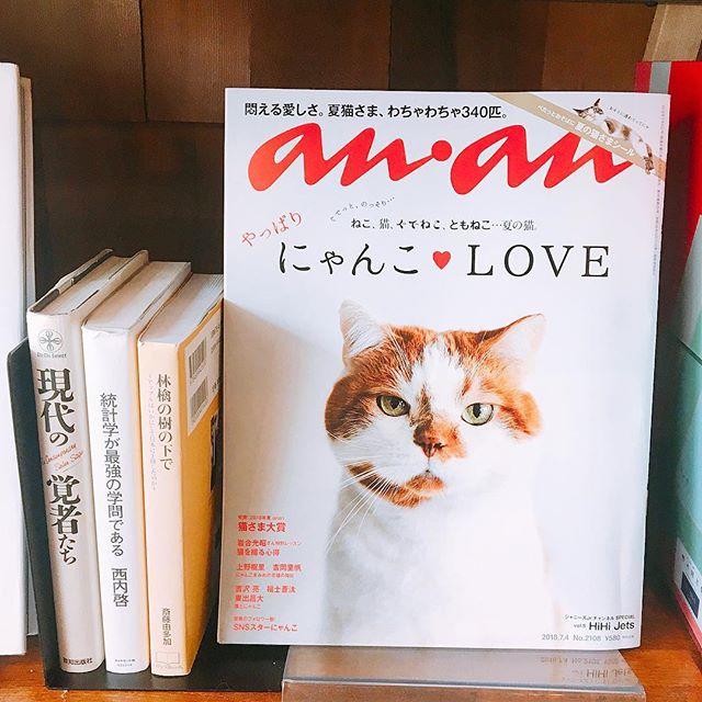 にゃんこ♡LOVE アルタナカフェでは様々な本や雑誌をご用意しております! ねこ様に癒されながらゆっくりされてはいかがでしょうか? アルタナカフェは本日も10時から17時までのオープン!