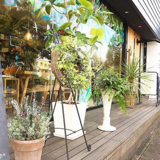 今回は新しく3つの植物をご用意していただきました。 綺麗なお花をありがとうございます(^^) アルタナカフェは本日11:30からの営業となります。