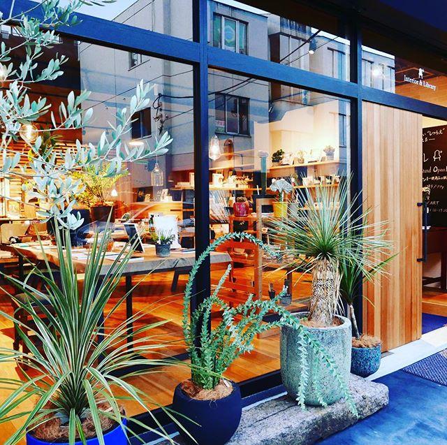 店先のグリーンはユッカロストラータ、三角葉アカシア、コルジリネを販売中!プレオープン9/3-9/30期間中〜の営業は 金、土、日、月 11:00〜17:00となります。