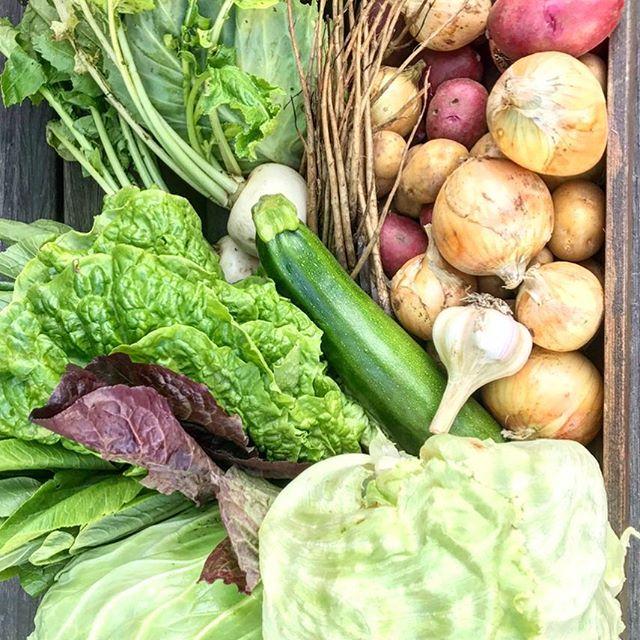 明日はテーブルマーケット! 明日7月1日は9時からテーブルマーケットを開催します(^^) 野菜やパン、花、アクセサリー、お取り寄せ品をご用意してお待ちしております。 またヒーリングコーナーもご用意! こちらではリンパやハンドマッサージ、、耳つぼ、カイロプラクティックも体験出来ますので美容や健康にご興味のある方は是非(^^)! アルタナカフェは本日も10時から17時までのオープンです。