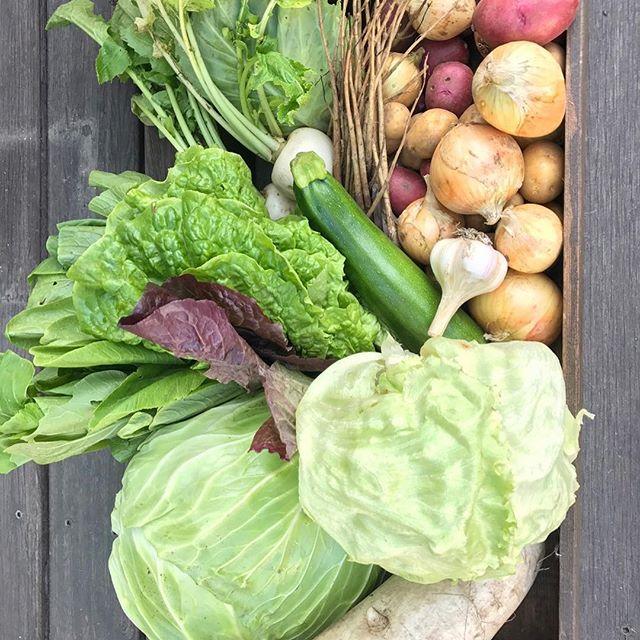 テーブルマーケットまであと3日! 9月2日(日)は毎月第1日曜日開催のテーブルマーケット! 新鮮野菜や人気のパン各地のお取り寄せ品などをご用意しています(^^) アルタナカフェは本日も10時から17時までのオープンです。