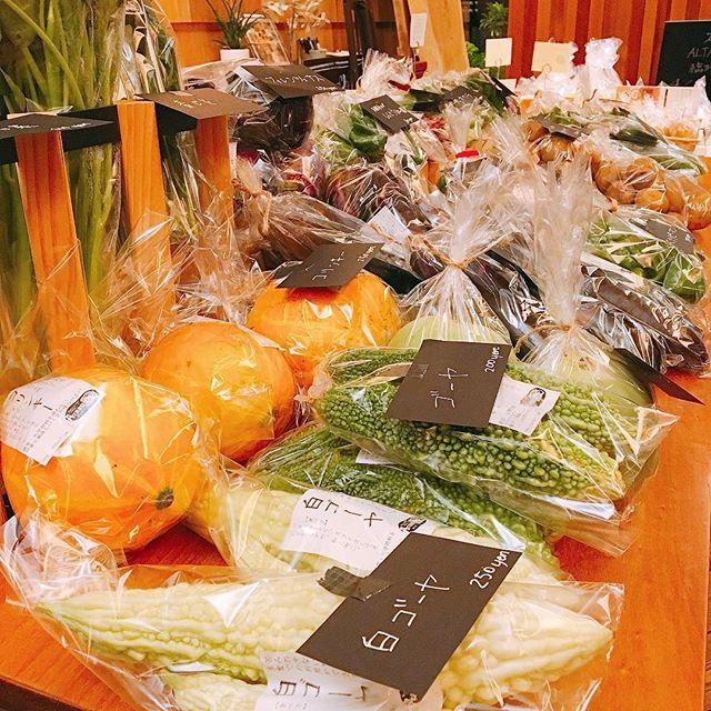 この後9時より 「テーブルマーケット」 開催します。 写真手前の白ゴーヤは通常の緑のゴーヤに比べ苦味が少なく食べやすいのでオススメですよ(^^) 他にも様々な野菜やパン、お取り寄せ品などご用意してお待ちしております!!