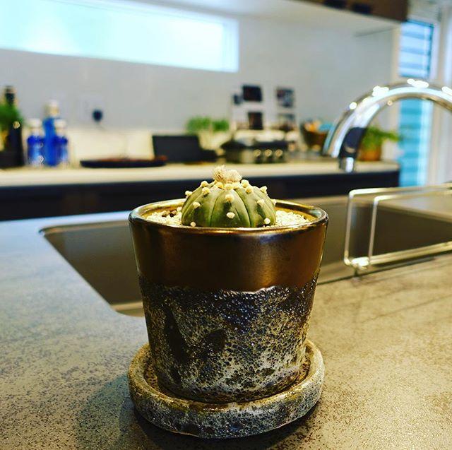 観葉植物と暮らす。 . . . 空間を彩るインテリアグリーン。 家具や生活雑貨とともにコーディネートしてみてはいかがでしょうか? . ヤマ造園多肉植物 ¥500+TAX〜お取り扱いしております。 .