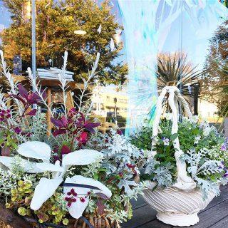 プランツギャザリング 様々な植物が一体となって単種とは違った魅力があるプランツギャザリング! アルタナカフェは本日も10時から17時までのオープンです。