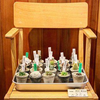 小さな多肉植物。 集めてみませんか? 明日4/28(日)、29(月・祝)も11:00〜17:00までオープンいたします!