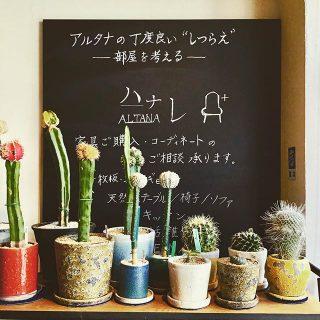 . インテリアグリーン販売中 植物がすくすく育つ季節です。 お気に入りを見つけに 遊びに来てください♪ ・・・・・・・・・ @hanare_altana OPEN:月金土日 11:00~17:00 富士市永田67-17 1F ︎0545-51-8700 ・・・・・・・・・