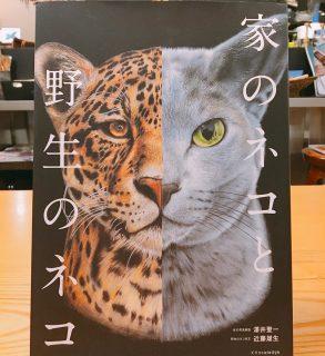 「家のねこと野生のネコ」 綺麗な写真と共に特徴や生態など紹介されています! アルタナカフェは本日9月5日(木)は16時閉店とさせていただきます。