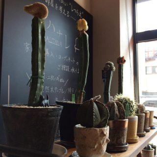 ︎ ハナレでは個性的な植物も扱っております。 お気に入りを見つけに来てください! ・