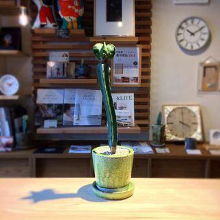 ︎ この曲がり具合が素敵です ・ 複隆碧瑠璃鸞鳳玉 Astrophytum myriostigma v. nudum f. ¥3,000+税 ・ 本日6/22(月) 17:00まで営業しております。 . 只今入店可能です!. . フリーでご来店の際にはお待ちいただく場合がございます。空いていれば1組ずつのご案内をさせていただきます。 家具打合せのご来店は、スムーズなご案内の為、ご予約をおすすめいたします🏻♀️ ・ ・ 感染症予防対策の為、何卒ご理解、ご協力のほどよろしくお願い申し上げます。 . . #インテリアショップ #サボテン #サボテンのある暮らし #インテリアグリーン